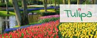 Tulipa, IĮ Логотип
